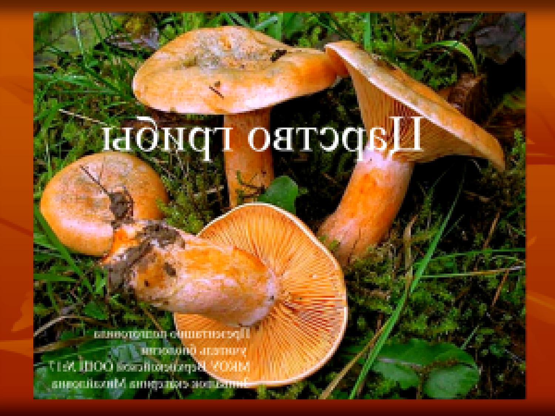 грибы саратовской области съедобные фото с названиями